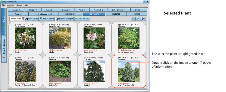 Selected-plant(1).jpg